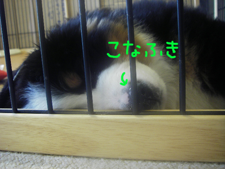 konafuki.jpg