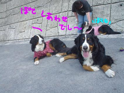 shiawase_20080407213950.jpg