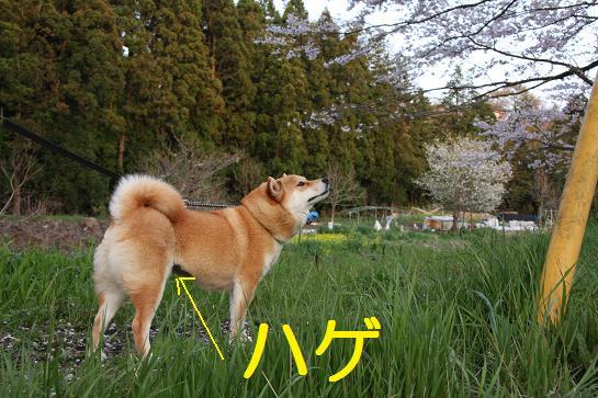 豊浦 041
