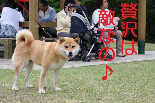 笠間祭り 056