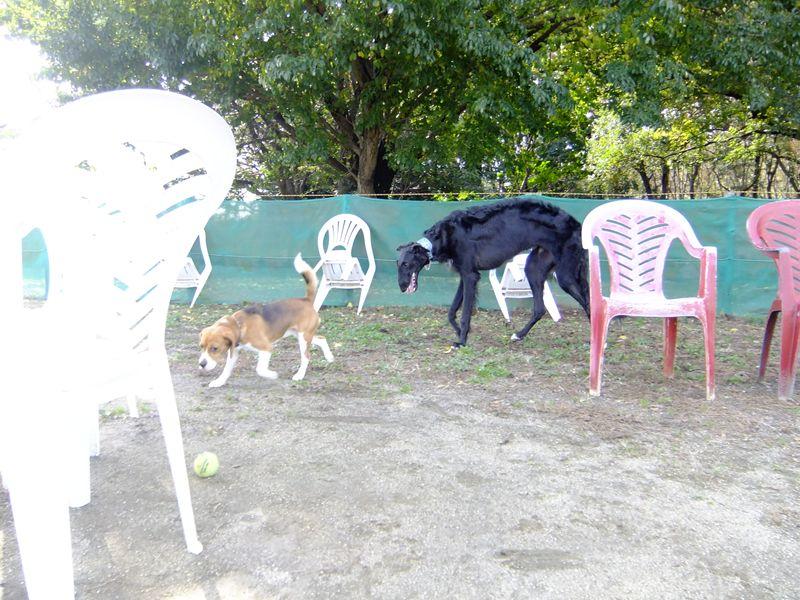 gatos perros yahoo dating