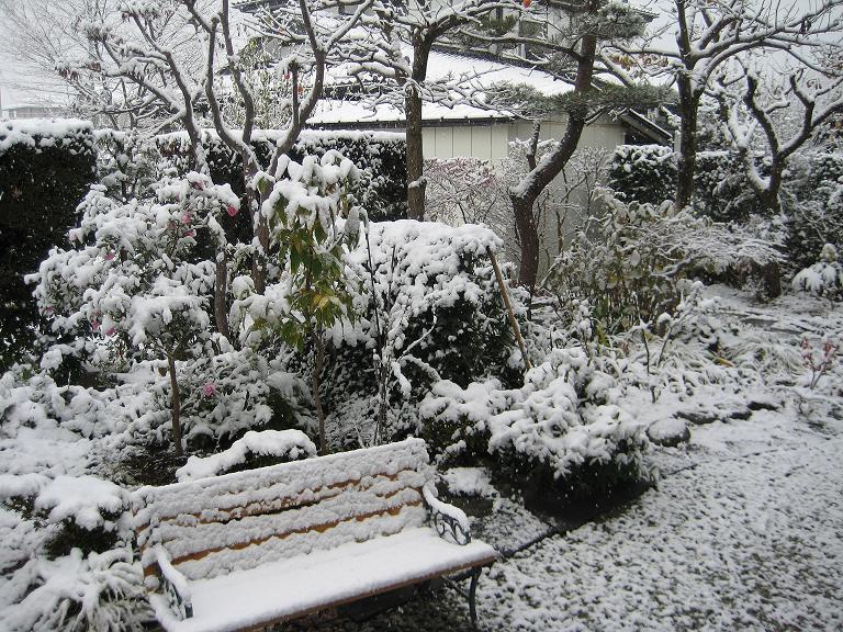 雪だー 2008 11/20 木