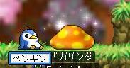 Maple31492.jpg