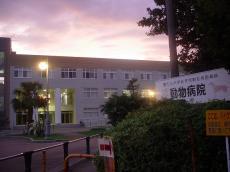 鹿児島大学郡元キャンパス (45)