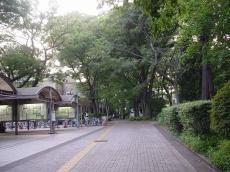 東京大学駒場 (11)