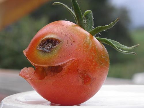 奇妙なトマト