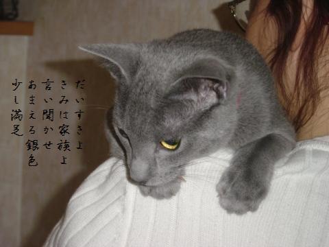 ねこ短歌(2007.11.13撮影)