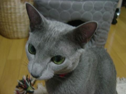 ニコライですにゃ(2008.02.01)