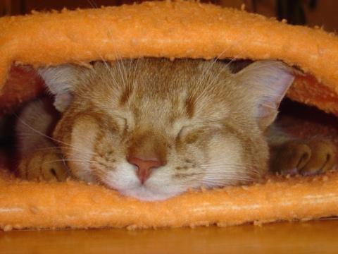 毛布の中でも(2008.03.22)