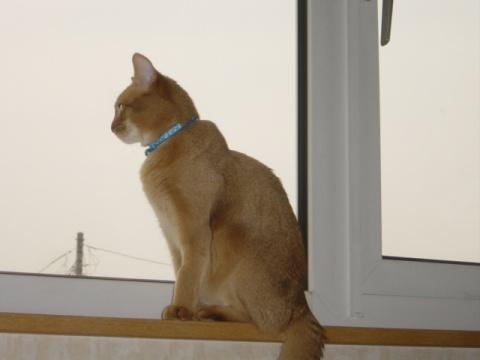 お外を見てるのよっ(2008.04.30)