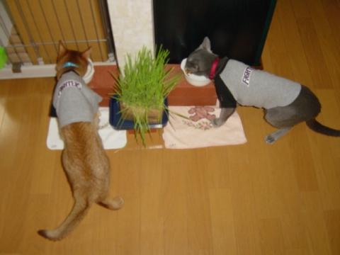 いつもの様子(2008.10.17)