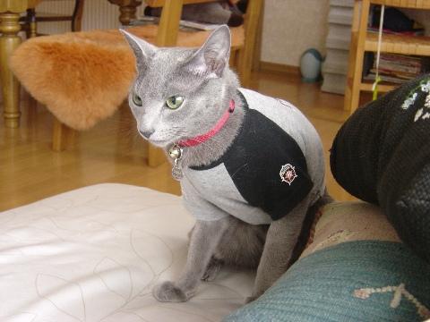 よしっ!にゃ(2008.10.18)