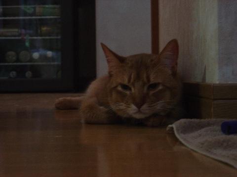 なにしてるのー?(2008.10.20)