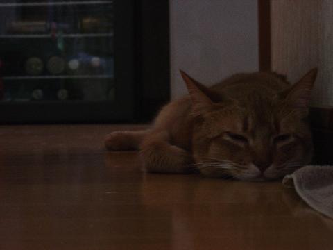 あのねー(2008.10.20)