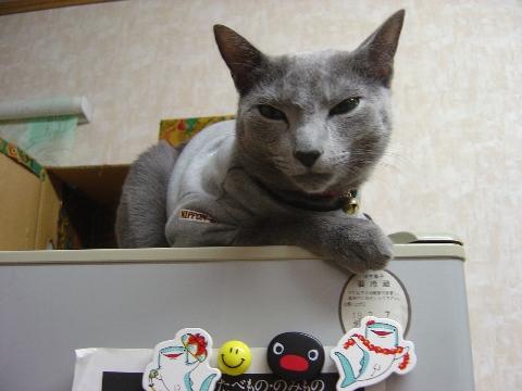 苦しい展開にゃ(2008.10.21)