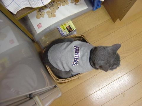 ...狭そう...(2008.10.21)