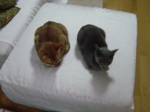 いろいろ違うね(2008.10.24)