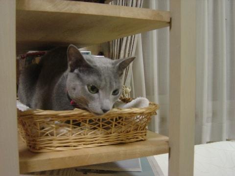 籠の中にゃ(2008.11.04)