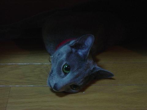 だらりん(2008.11.08)