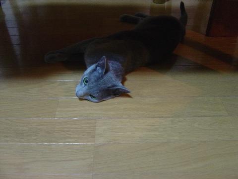 だらりーん(2008.11.08)