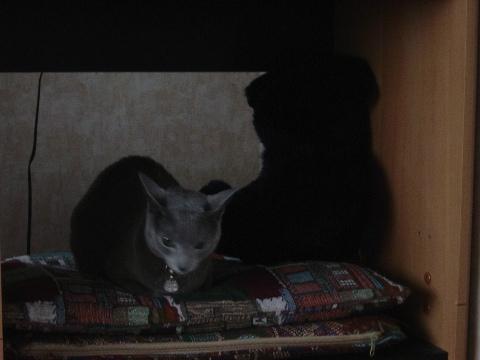 1階にゃ(2008.11.08)