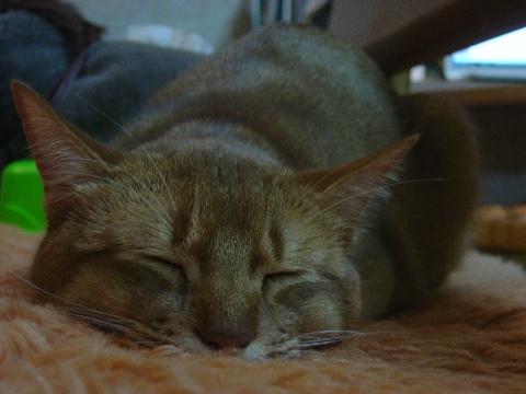 運痴なのよっ(2008.11.09)