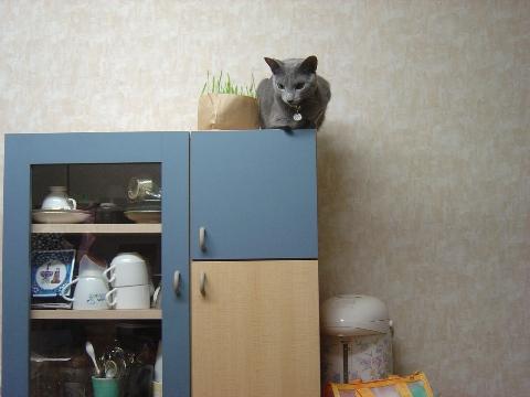 食器棚の上だにゃ(2008.11.10)