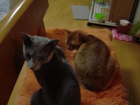 ここ好き~(2008.11.13)