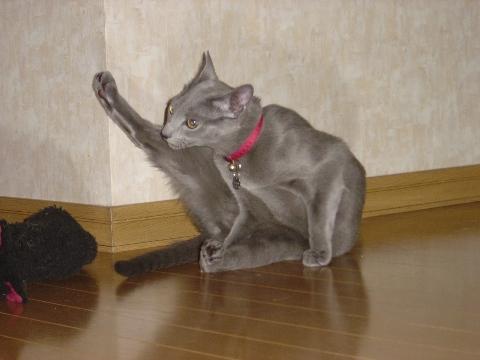 ぷんぷんだにゃ(2008.11.15)