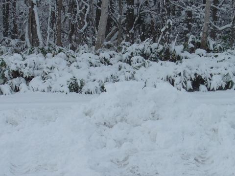 除雪の跡(2008.11.20)