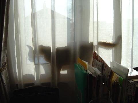 お外を見るのよっ(2008.11.22)