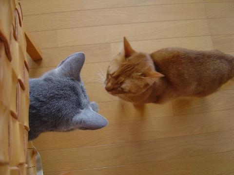 ねえねえ、おにーにゃん(2008.11.24)