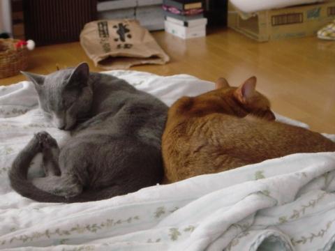 背中合わせにシンクロ(2008.11.24)