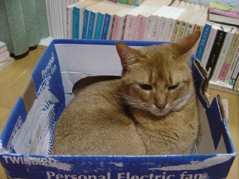 新しい箱なのよっ(2008.11.25)