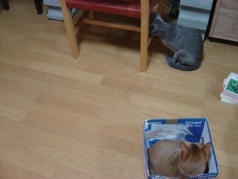 ビミョウな位置関係(2008.11.25)