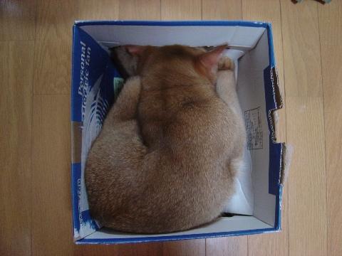 押し寿司!(2008.11.25)