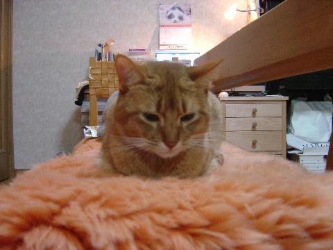 ジョゼフィンなのよっ(2008.11.26)