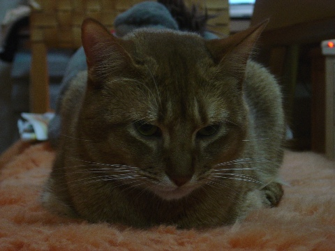 ひとりじゃないのよっ(2008.11.26)