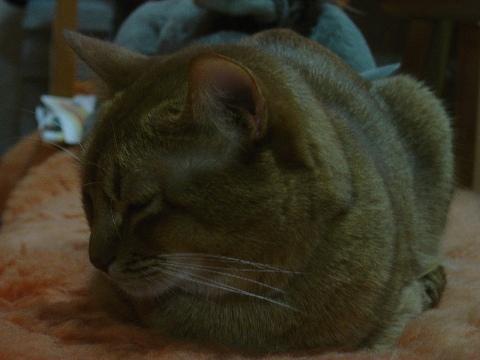 おにーにゃんがいるのよっ(2008.11.26)