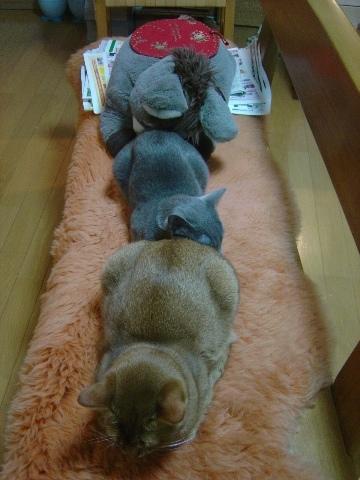 三両編成なのよっ(2008.11.26)