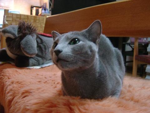 かわいい♪(2008.11.29)