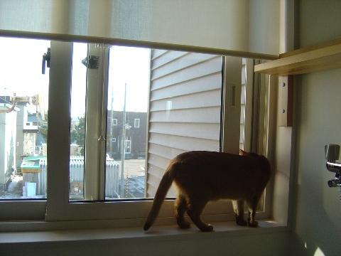 風が来るのよっ(2008.11.29)
