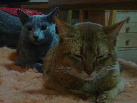 前後シンクロ(2008.11.30)