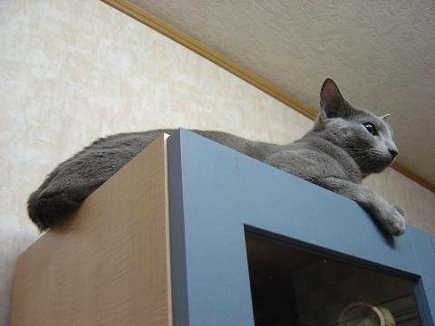 食器棚の上(2008.12.04)