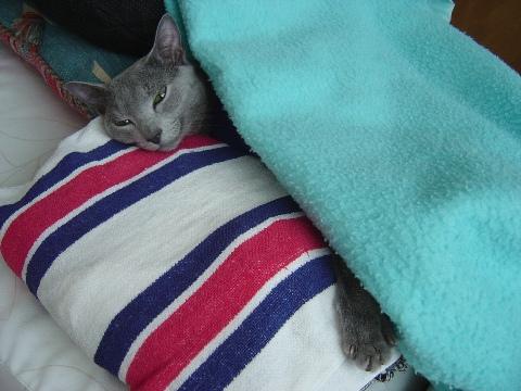 寝るにゃ(2008.12.06)