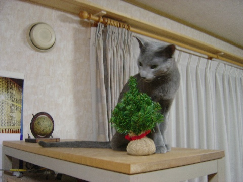 ヘンなやつだにゃ(2008.12.07)