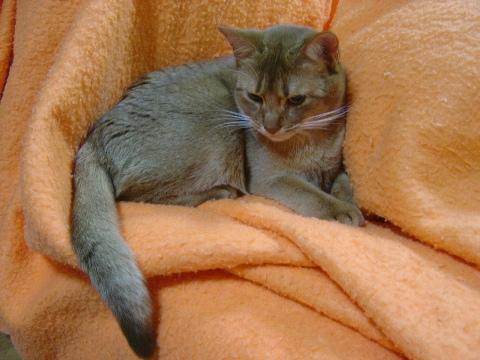 大好きな毛布なのよっ(2008.12.08)