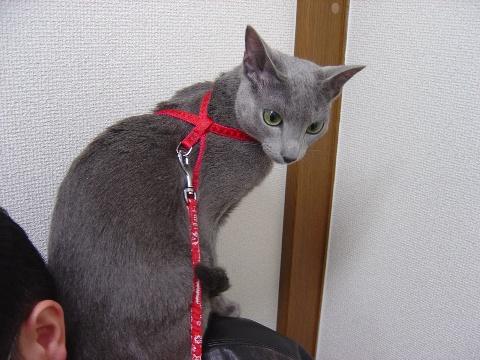 ひよひよニコライくん(2008.12.13)