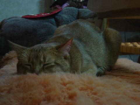 ねむジョゼ(2008.12.16)