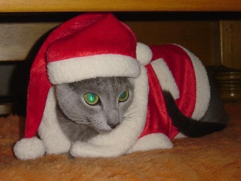 サンタさん(2008.12.19)